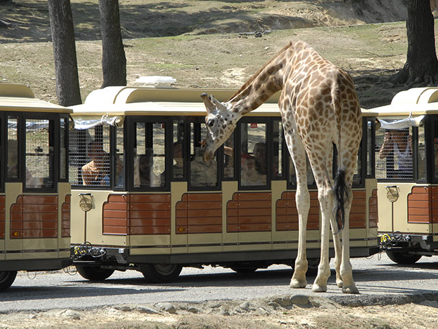 Carrozza C 94 - Safari Park Pombia, Italy